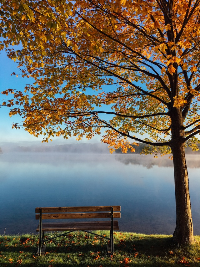 fall-meditative-bench
